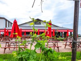 red umbrellas in patio through green vineyard vine niagara on the lake wineries inniskillin