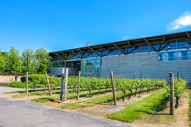steel and glass building with green vineyards in front jackson triggs