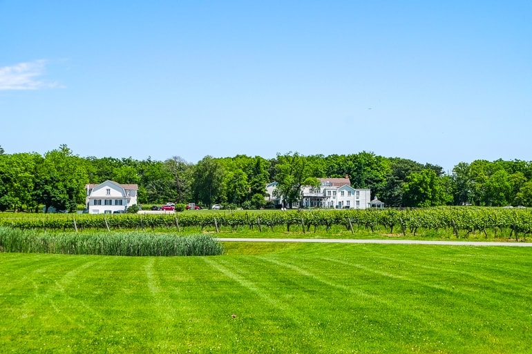 green lawn with white houses in distance at peller estates niagara on the lake winery