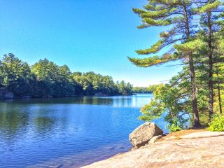 muskoka pine tree with rock over blue water hardy lake provincial park