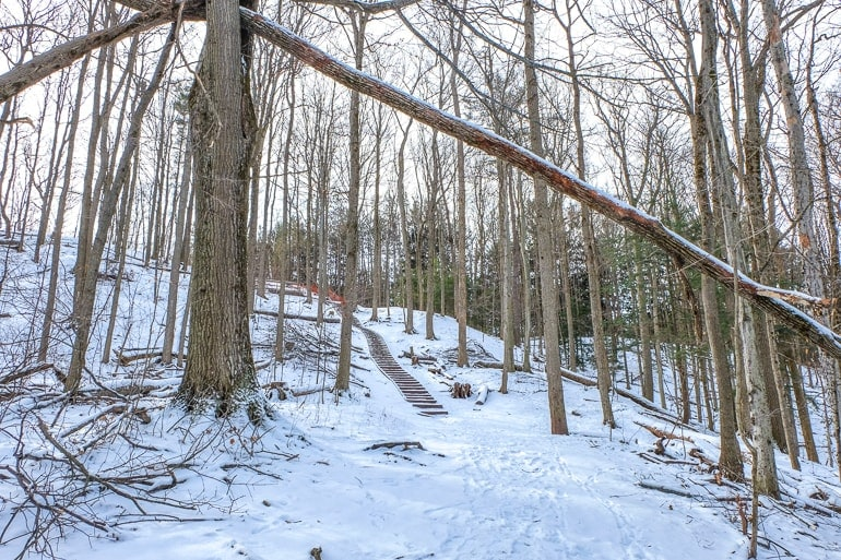 wooden steps on trail in forest in winter thornton bales conservation area
