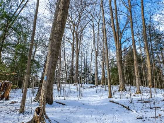 trail through trees in winter thornton bales conservation area