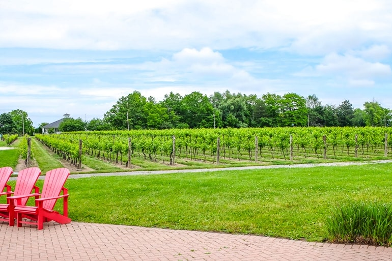 red muskoka chairs with vineyard behind at inniskillin niagara on the lake