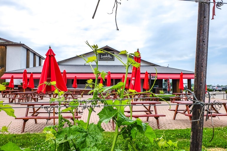 red umbrellas and building through green wines at winery niagara on the lake