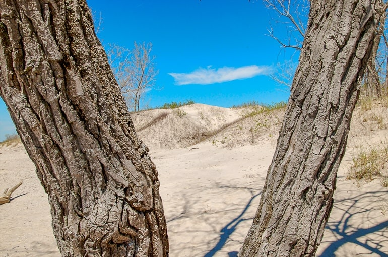 sand dunes with blue sky between trees at sandbanks provincial park