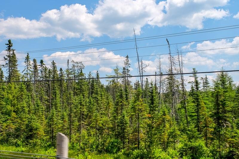 green trees and blue sky on the roadside muskoka ontario