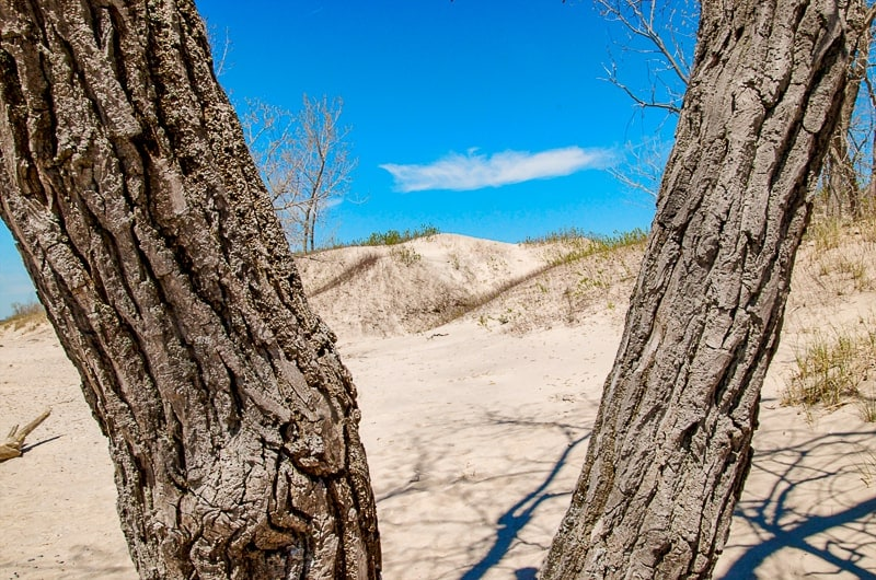 sand dunes seen between two trees with blue sky at sandbanks provincial park things to do in prince edward county