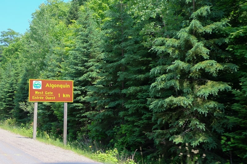orange road sign on ride of highway with trees behind algonquin park