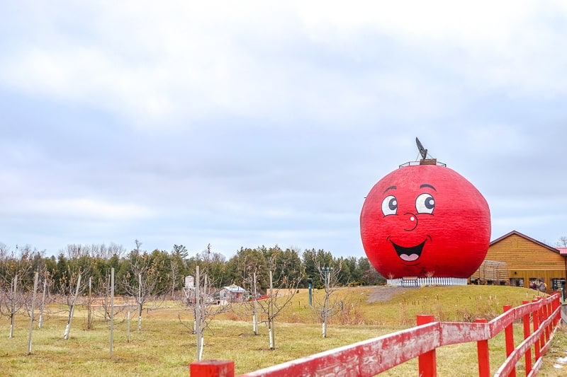 large red smiling apple outside with grass and orchard in front