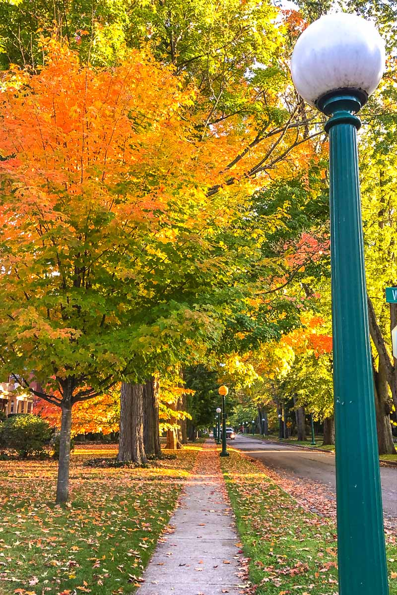 fall leaves along street with green lamp post in front