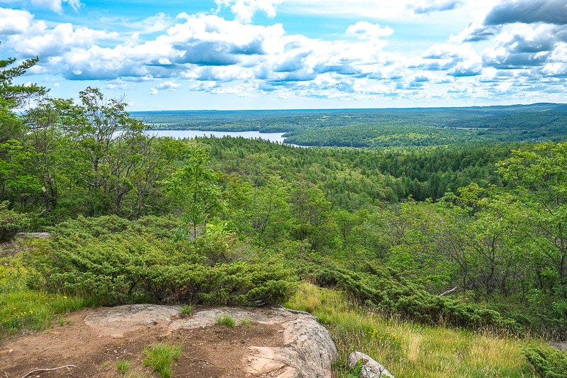 green trees across ottawa valley with rocks in front
