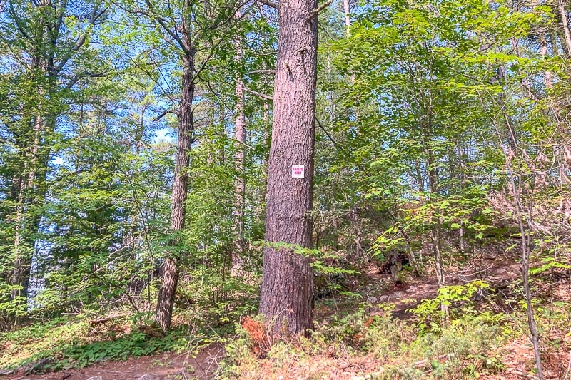 small sign on large pine tree in forest