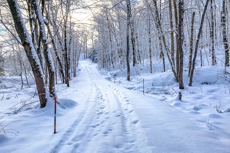 snowy road through thin forest with sun behind